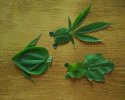 用树叶做成的画_用树叶拼图图片,怎样用树叶做拼图,手工制作树叶拼图 肉丁儿童网